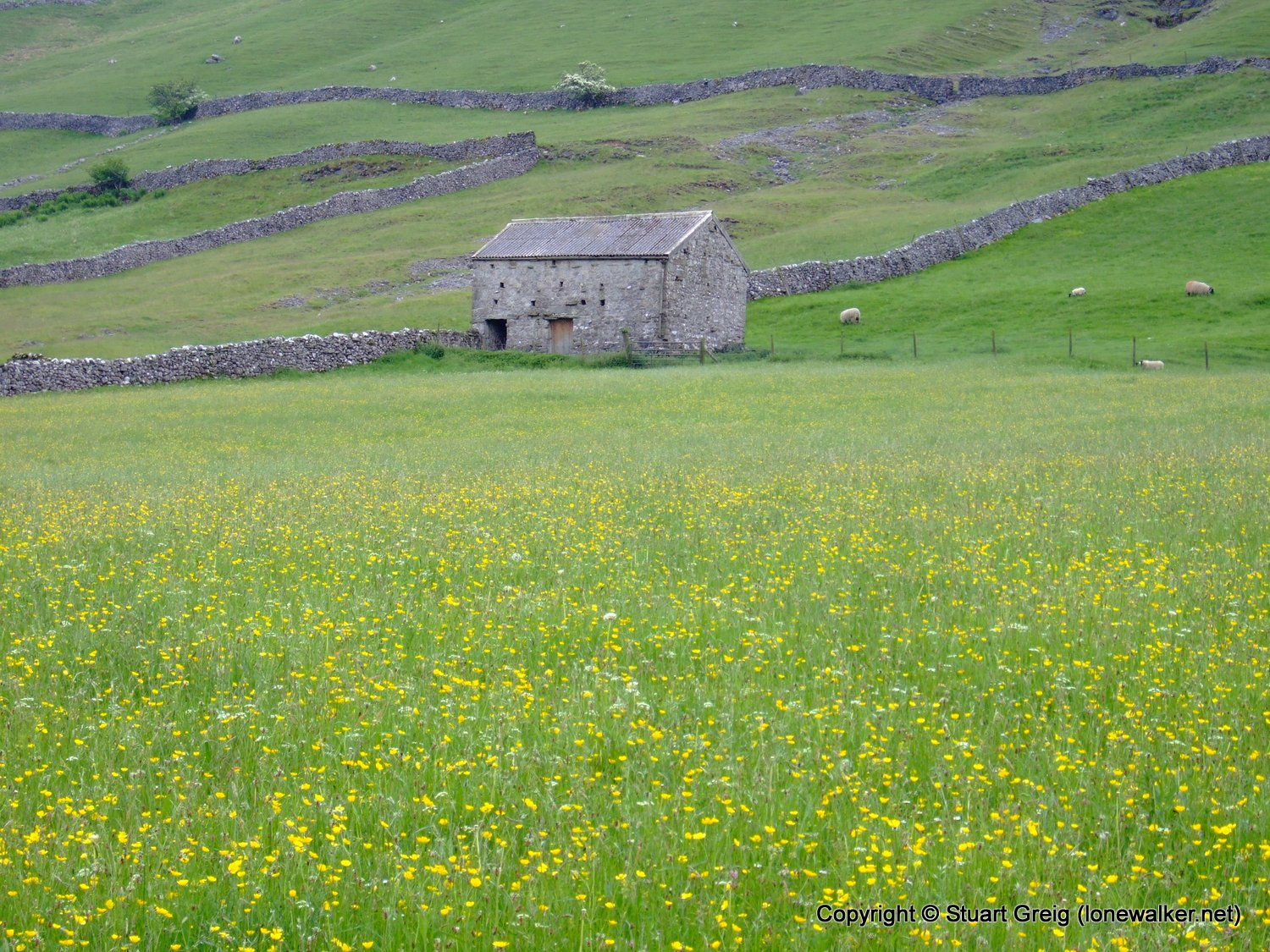 Great Whernside and Buckden Pike