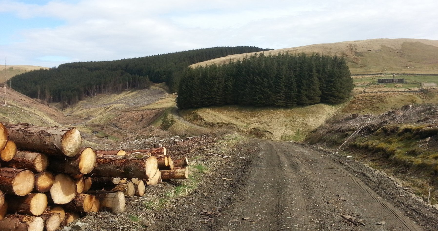 Logging piles beside the road in Craigy Cleugh