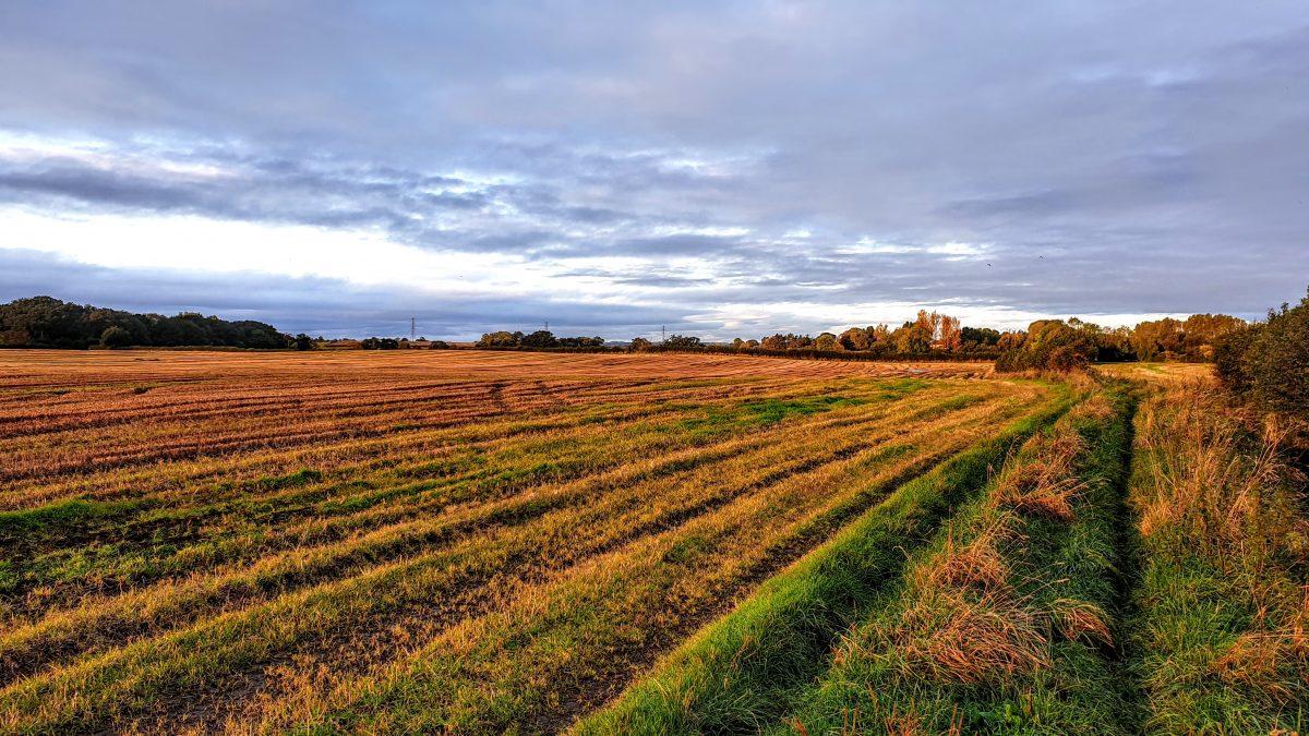 Early morning across the fields