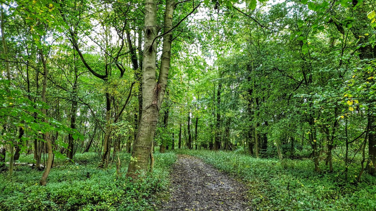 Final section of woodland before reaching the car