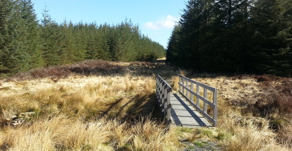 Forestry walking, often a mixture of bog and fallen trees