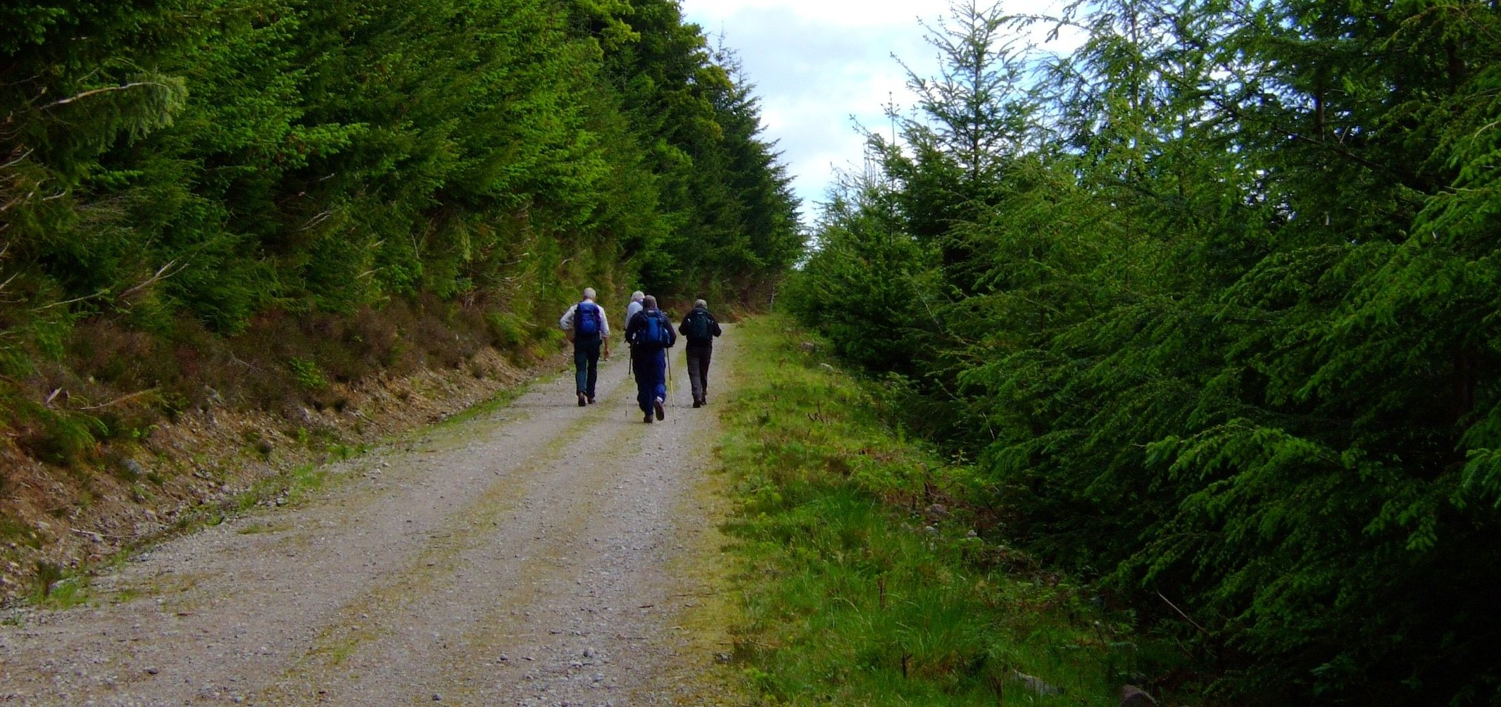 The forestry road from Invermoriston