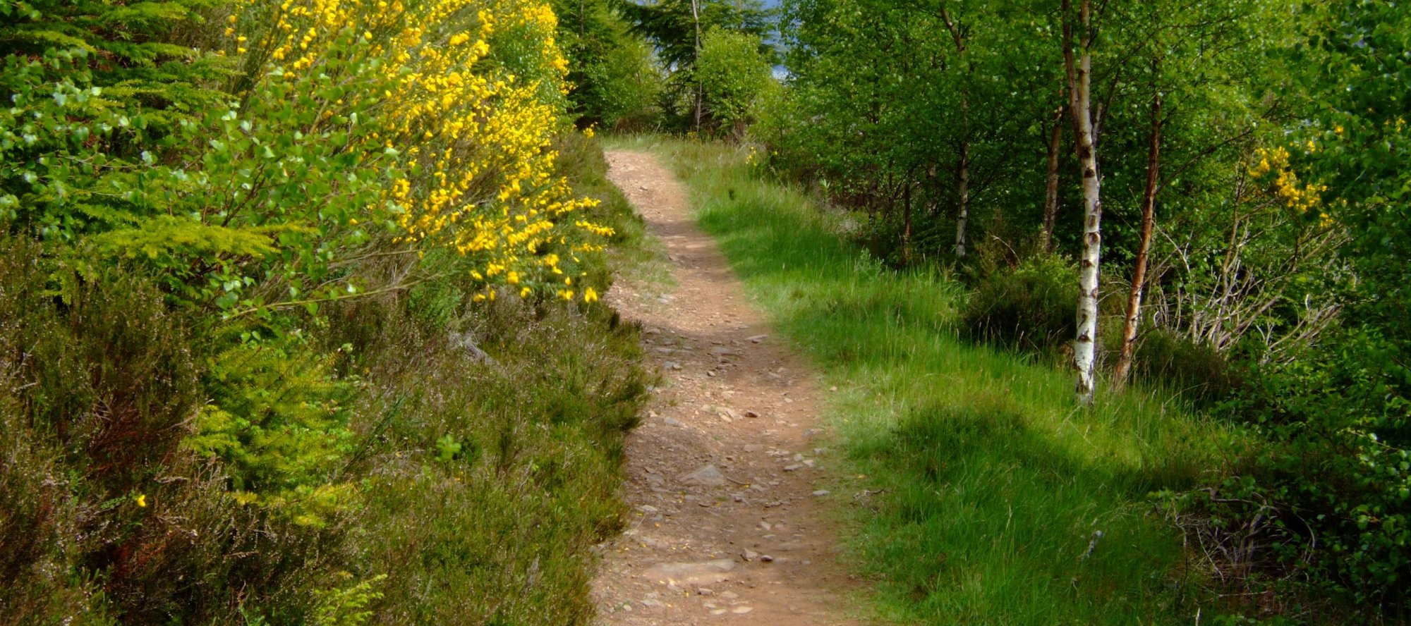 Forest path beside Loch Ness