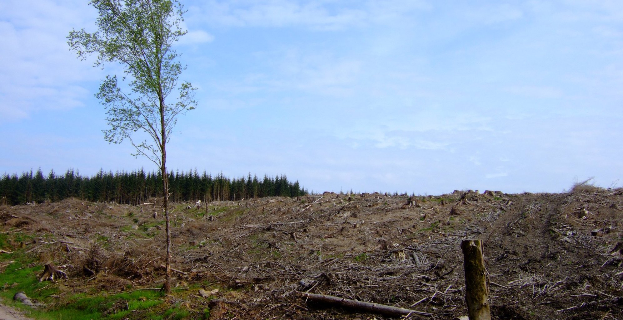 And a similar area after it has been felled and logged