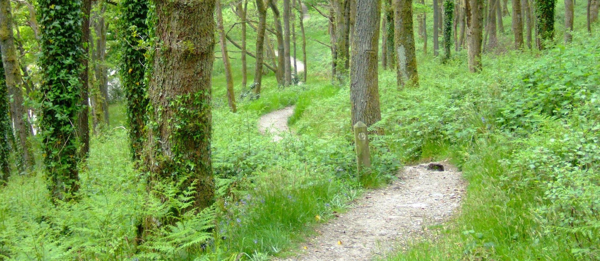 Into the trees beside Loch Lomond