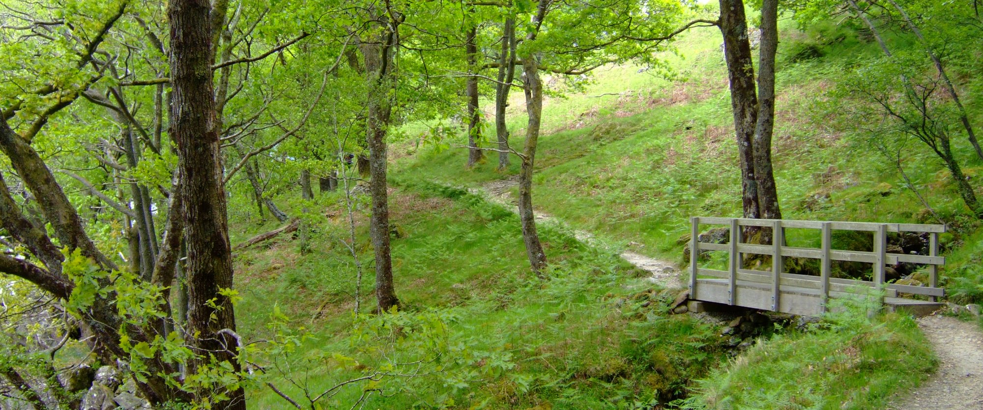 Wooded path beyond Inversnaid