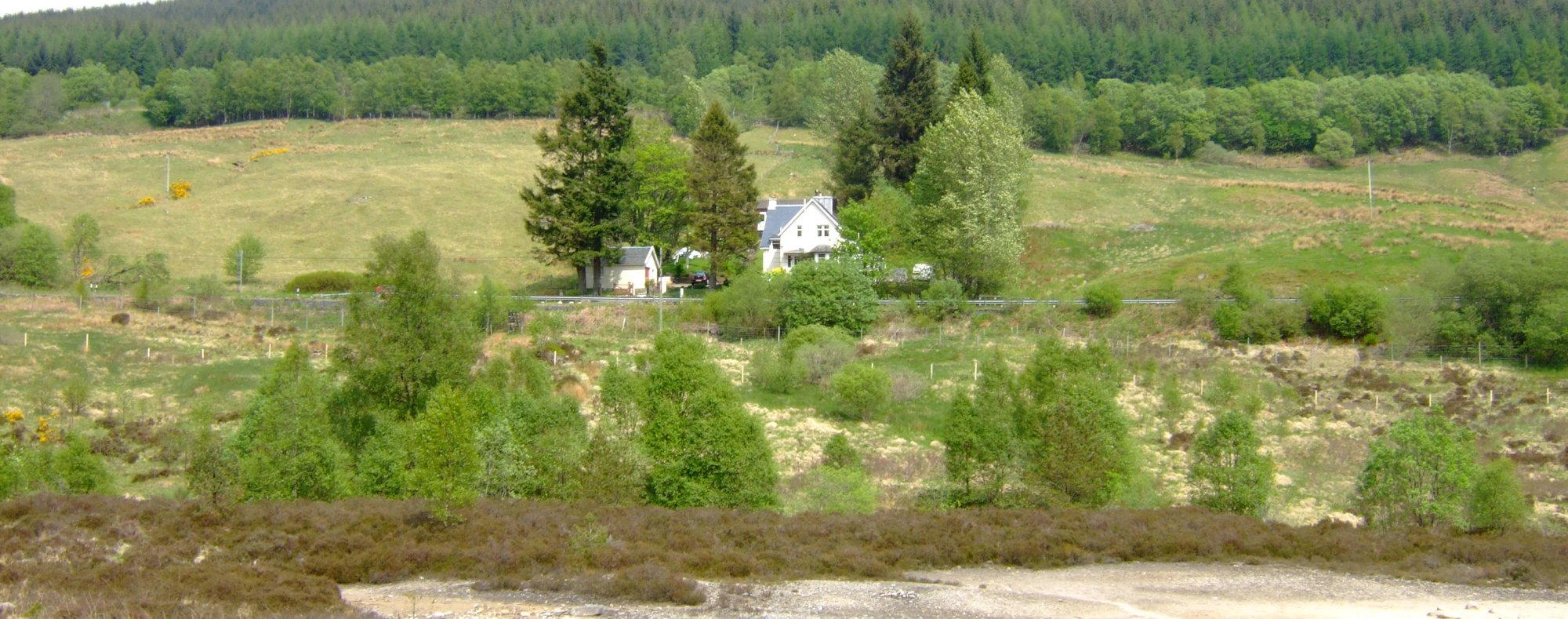 Glengarry House - the path from the WHW is beside the largest tree (left and centre) across some stepping stones in the burn