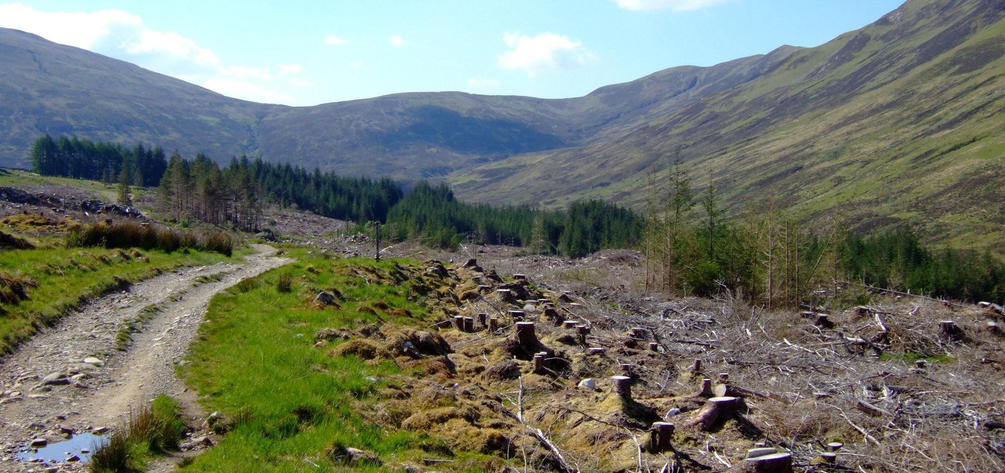 Felled forest by Lochan Lunn Da-Bhra