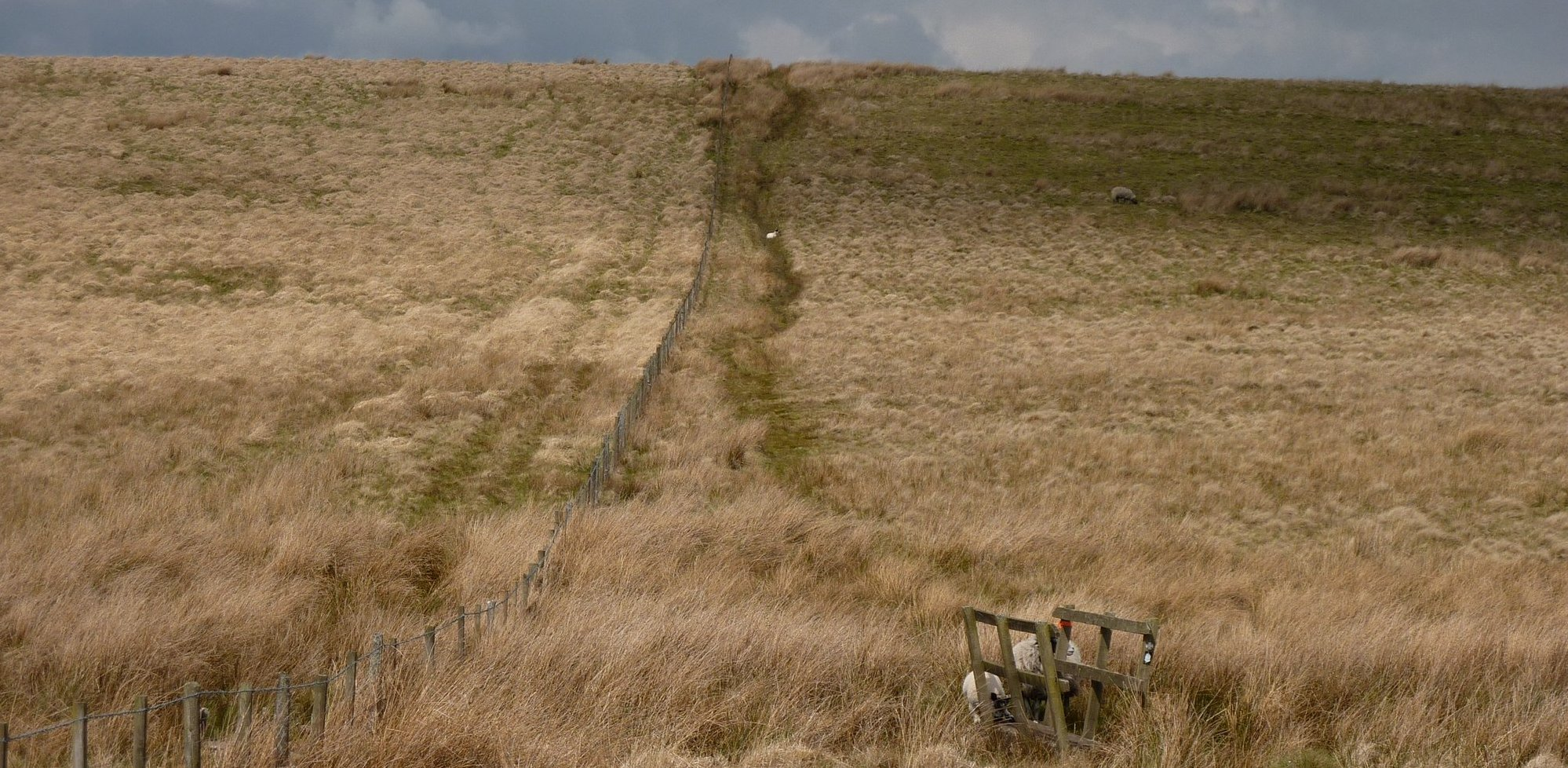 Hartleyburn Common (North Side)