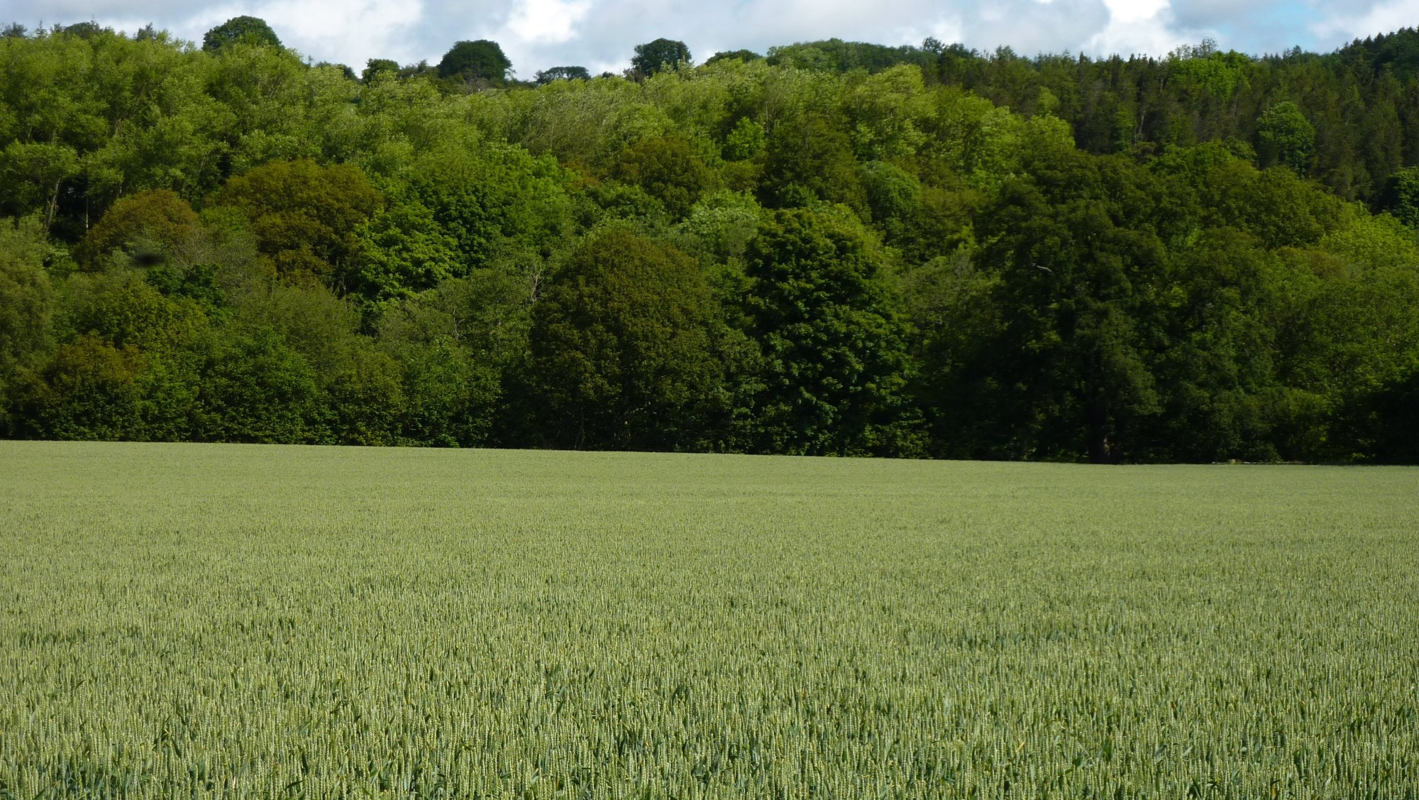 Fields on the way through Egton Bridge