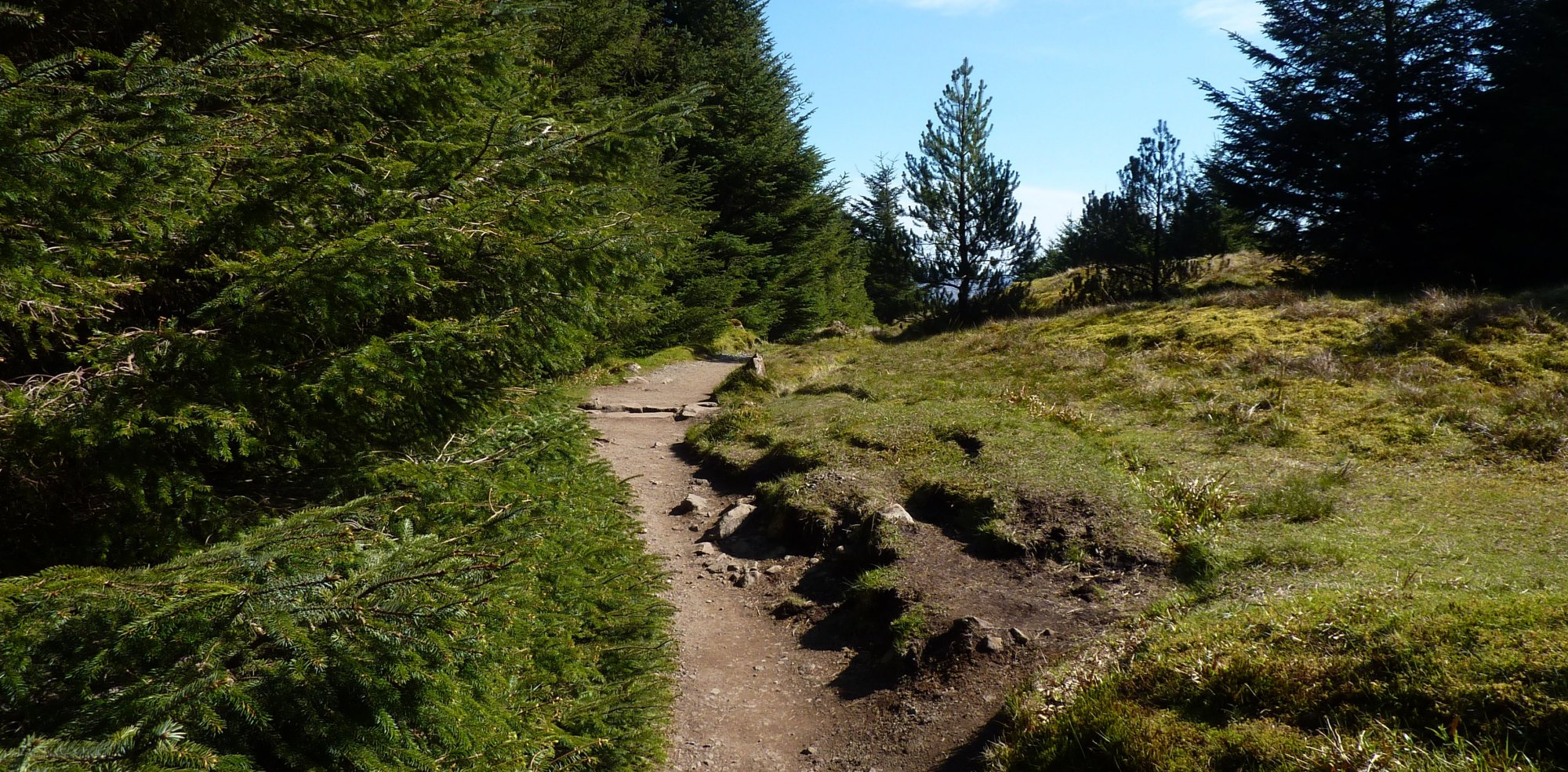Following the lovely path through the trees down from the Old Man of Storr to the car park
