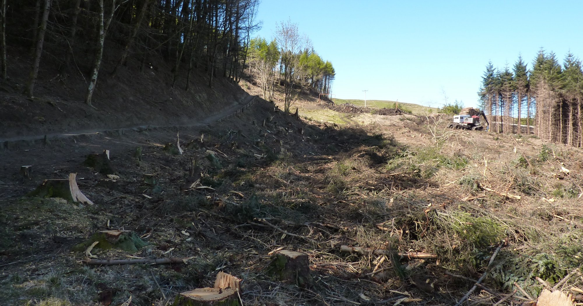 The terrible devastation of trees at the bottom of the path - it's harsh and dreadful