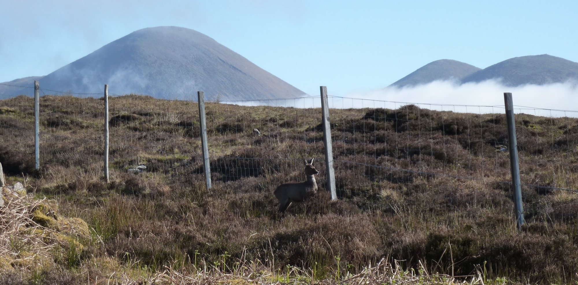 The second deer wasn't quite as agile as his mate, didn't manage to jump the fence and got in a right tizzy