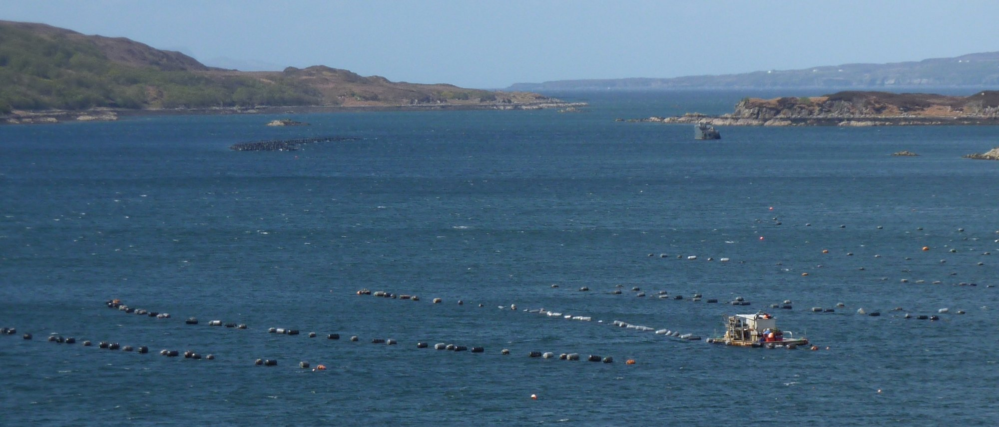 The mussel lines in the loch, with attendant vessel