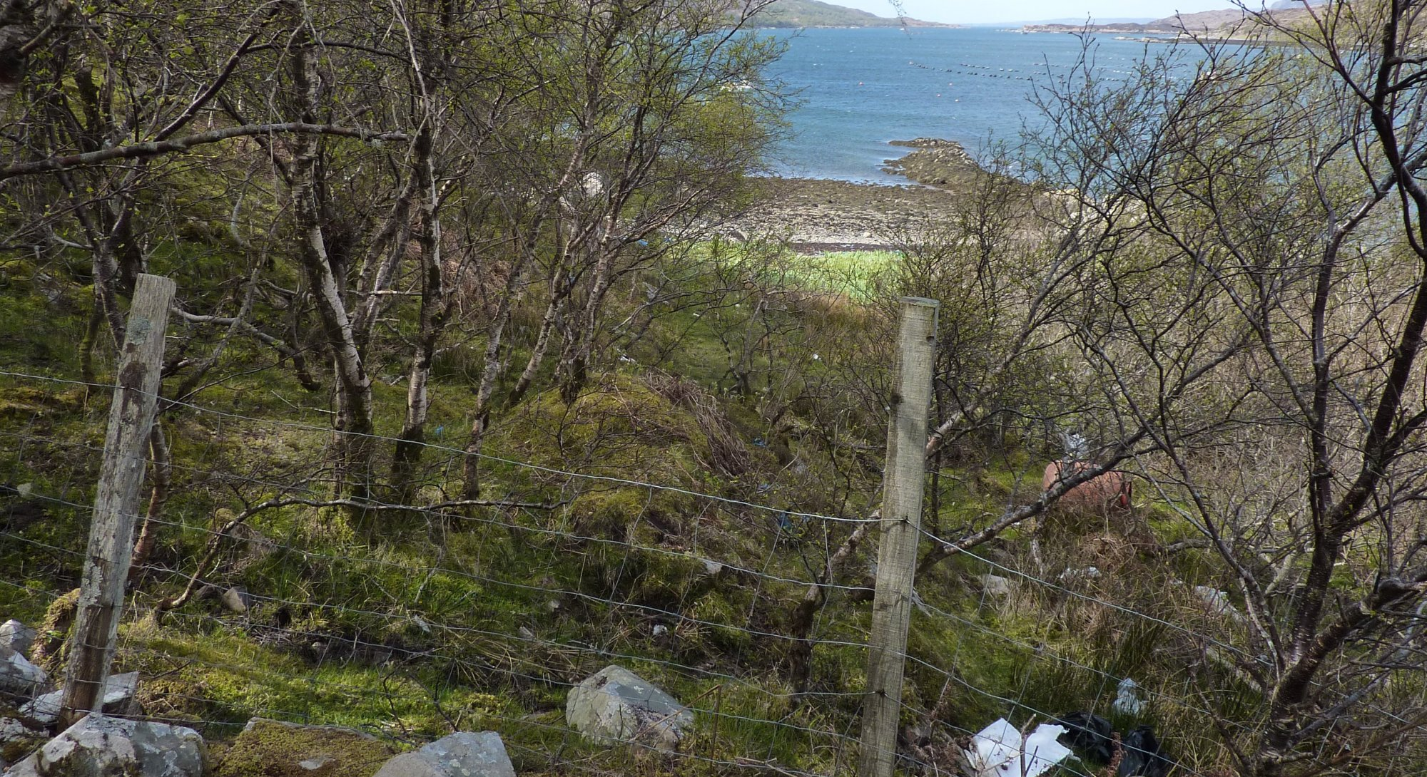I went awry somewhere and had to hack my way through some undergrowth to get back to the shore at Drumfearn harbour