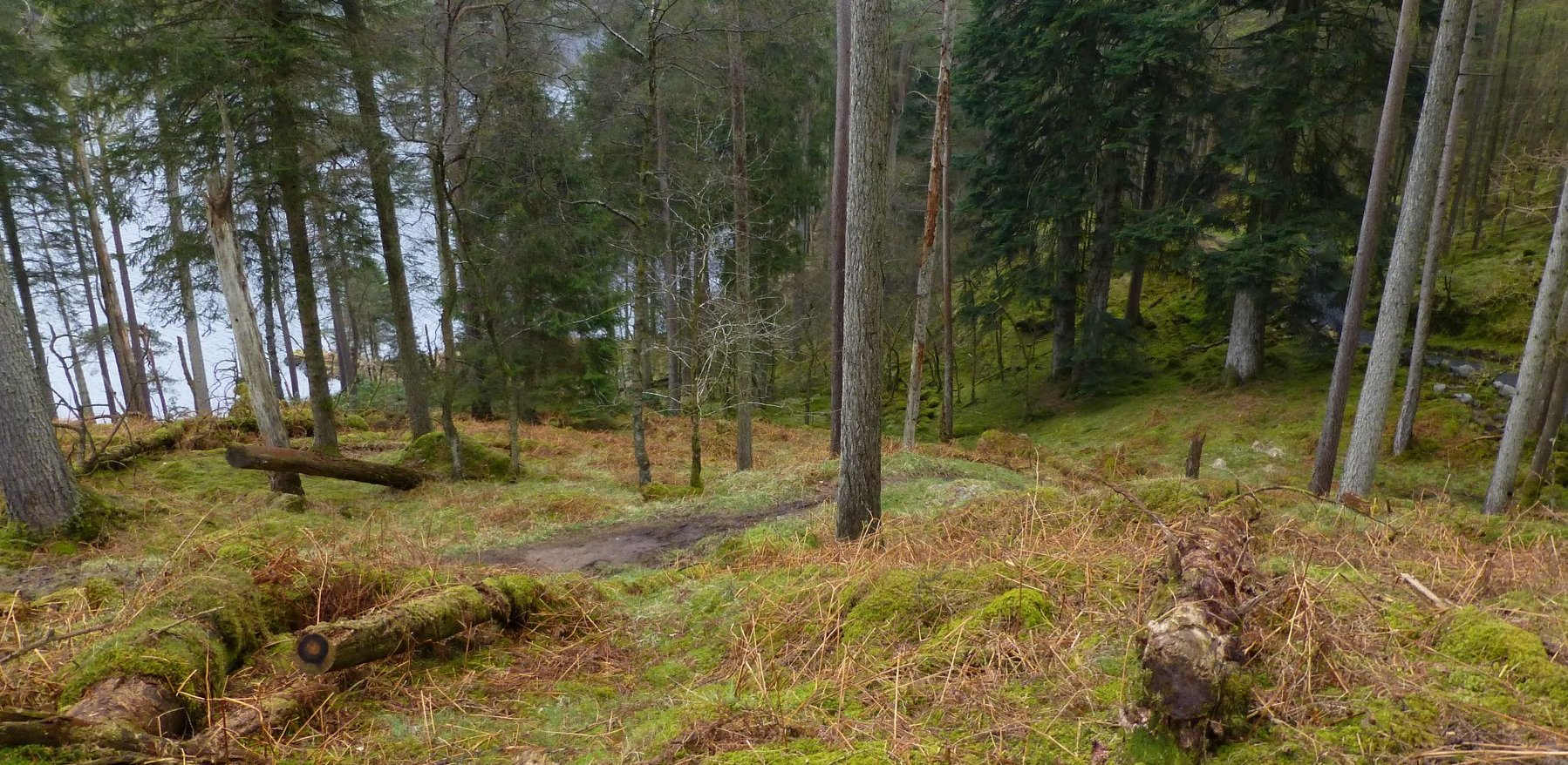 Lovely winding path through the woods beside Loch Trool