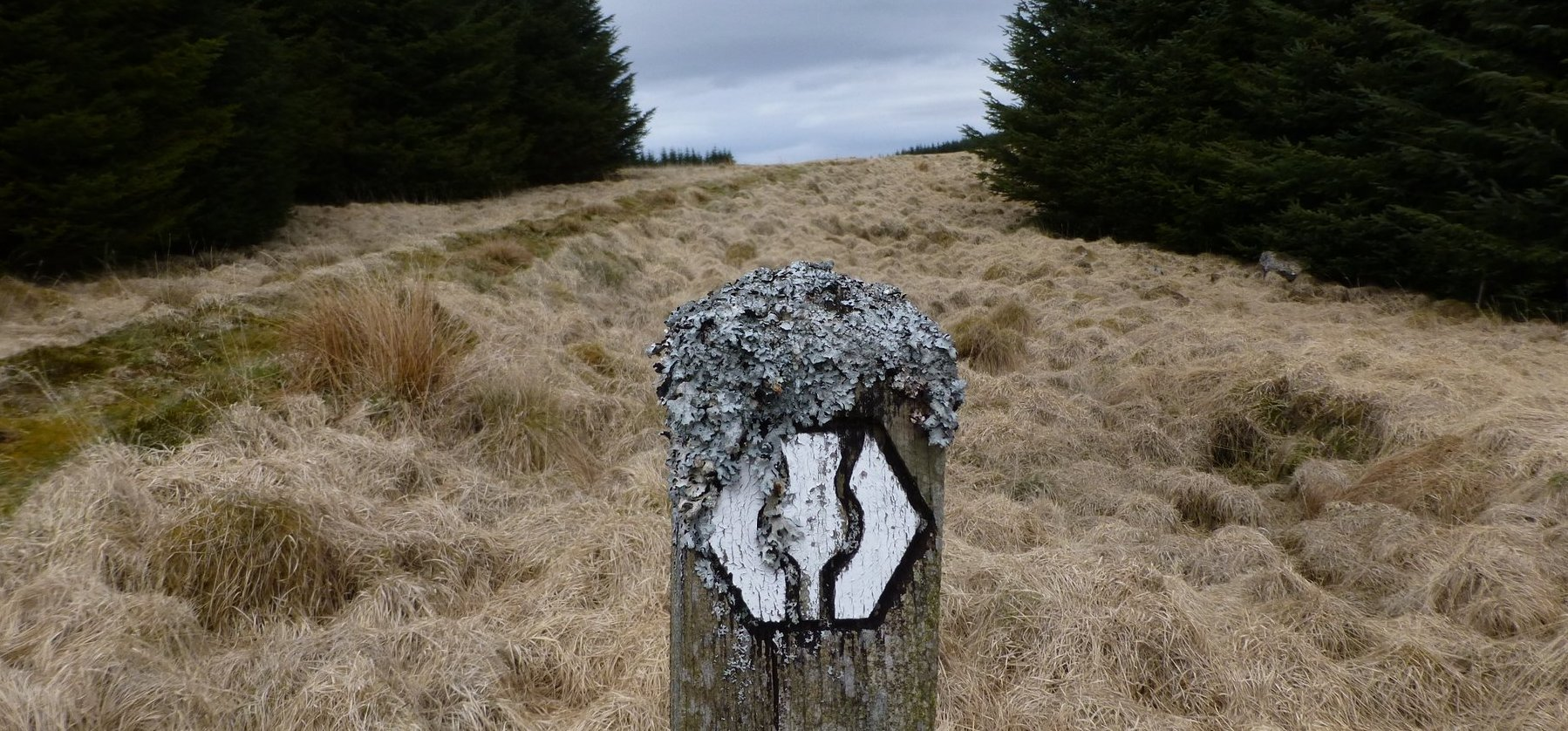 There are some wonderfully crusty old way markers on the SUW