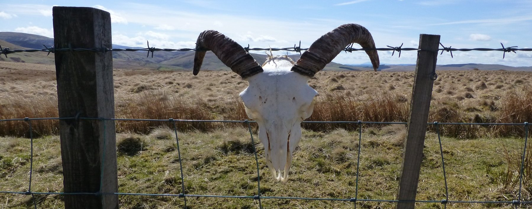 Interesting fence ornament on the way up Coupland Knowe