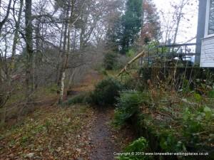 Tree across the path at Alston YHA