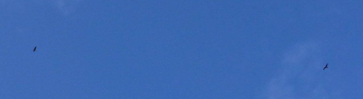 Dog fight in the blue skies above Stroanpatrick
