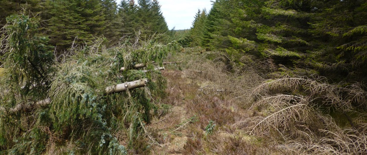 Some felled trees have been cut back...