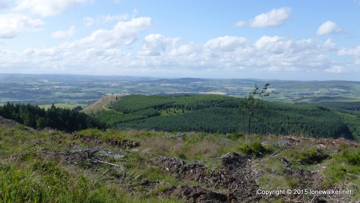 Looking down on the still forested summit of Fron-wen