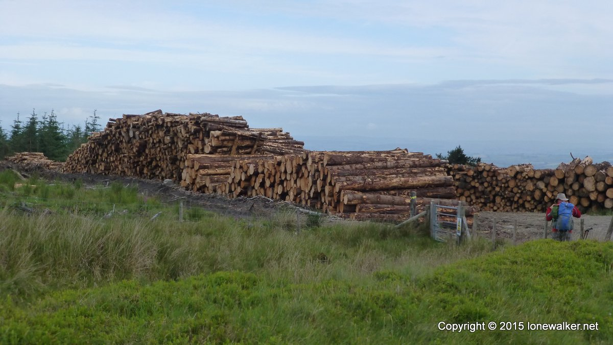Timber stacks beside the path to Black Mixen